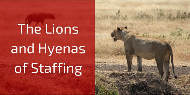 The Lions and Hyenas of Staffing